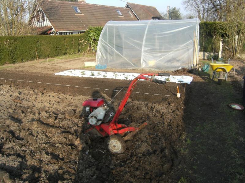votre jardin en Mars et avril ? Dscf5313