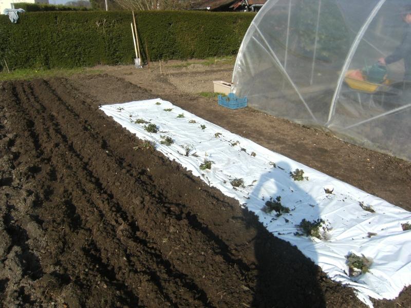 votre jardin en Mars et avril ? Dscf5314