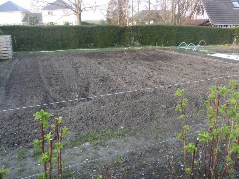 votre jardin en Mars et avril ? Dscf5320