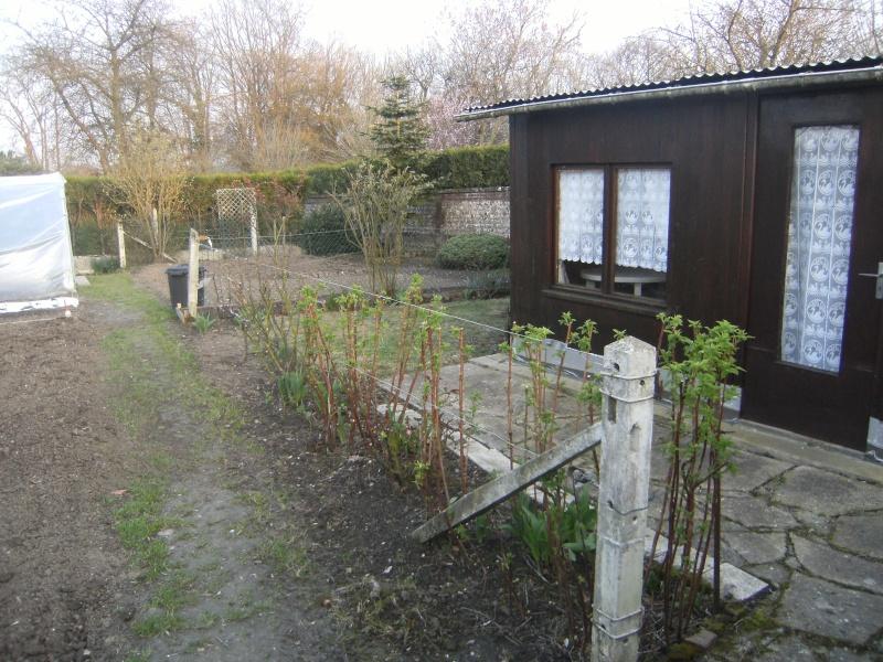 votre jardin en Mars et avril ? Dscf5321