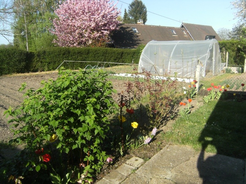 votre jardin en Mars et avril ? - Page 2 Dscf5615