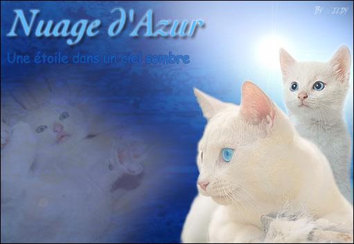 Nuage d'Azur ~ Tigre ~ Mâle {LIBRE} Azur10