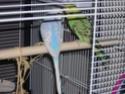 quel beau plumage Dscn2010