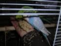 quel beau plumage Dscn2012