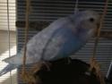 quel beau plumage Dscn2013