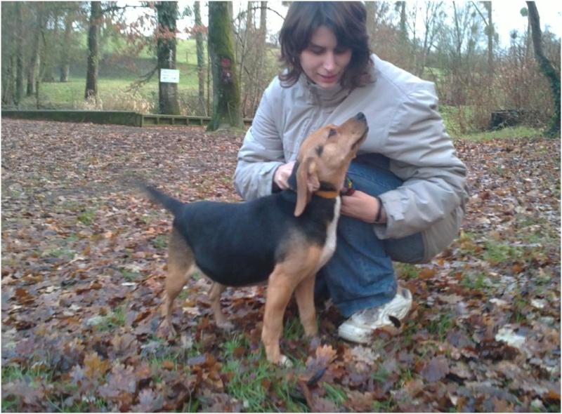 VENISE, beagle femelle, 7 ans (44) Venise13
