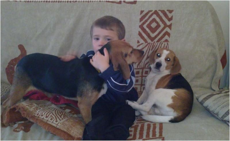 VENISE, beagle femelle, 7 ans (44) Venise23