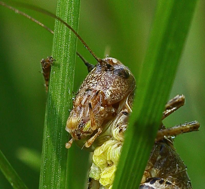 portrait d'insecte Retouc10