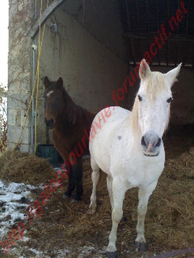 FLAMENCO - Hipano-arabe né en 1989 - & BANDIT - OI né en 1991 - adoptés en avril 2011 5eme1010