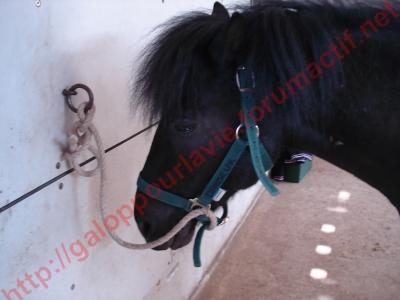 Danseur ONC poney - placé hors association Danseu13