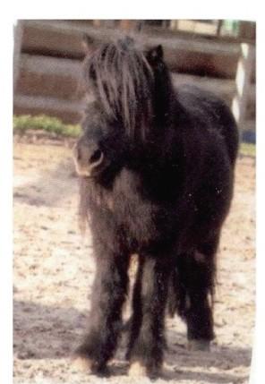 Satanas ONC poney - placé hors association Satana10