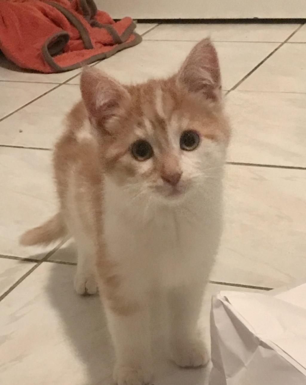 Hector / chaton 3,5 mois E4ca5f10