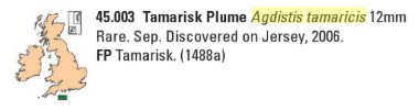 [Agdistis tamaricis (Pterophoridae)] Chenille pédonculée ?  A_tama10