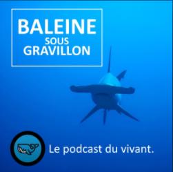 [Podcast] Connaissez-vous des reportages naturalistes audio ?  Bsg10