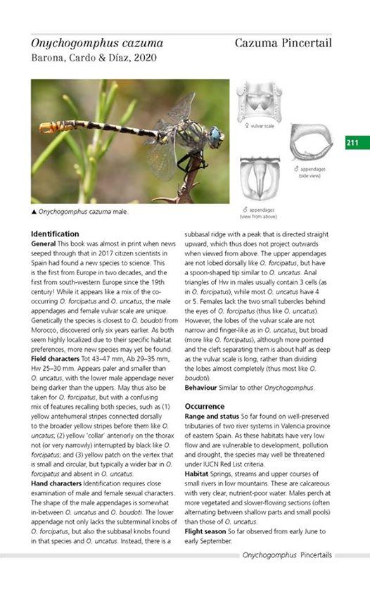 [Onychogomphus cazuma] Une nouvelle espèce décrite en Espagne en 2020 Onycho10