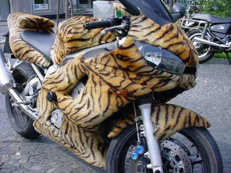Mon nouveau BB Tiger! - Page 2 Image410