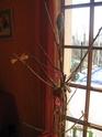 Un arbre à Perruches !!! - Page 3 Img_4012