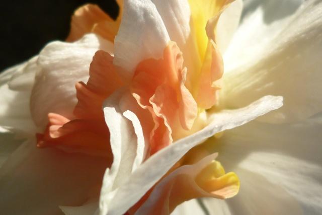 -12- Thème suivant !!!.....Coeur de fleurs !!! - Page 3 P1030210