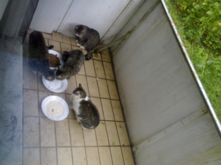 Ich habe Katzen- und Hundefutter gekauft - obwohl ich keinen Kontakt zu ihnen habe 11092010