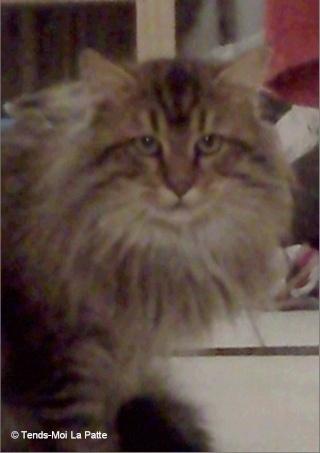 JAZZ rebaptisé JASON mâle à poils longs de 2 ans  A15