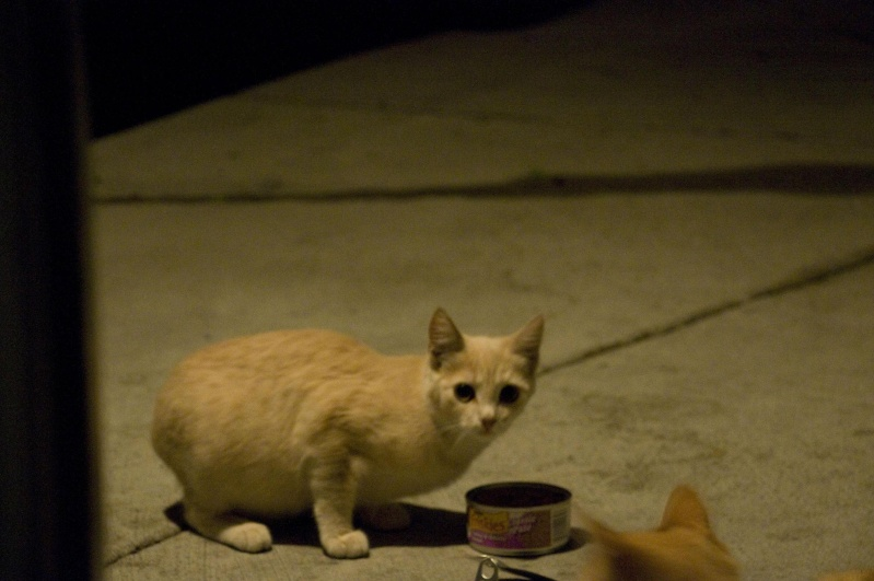 I have found 3 new recruits! Feral Kitty DPSers!  Qqldk10