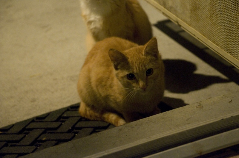 I have found 3 new recruits! Feral Kitty DPSers!  Tjtk912