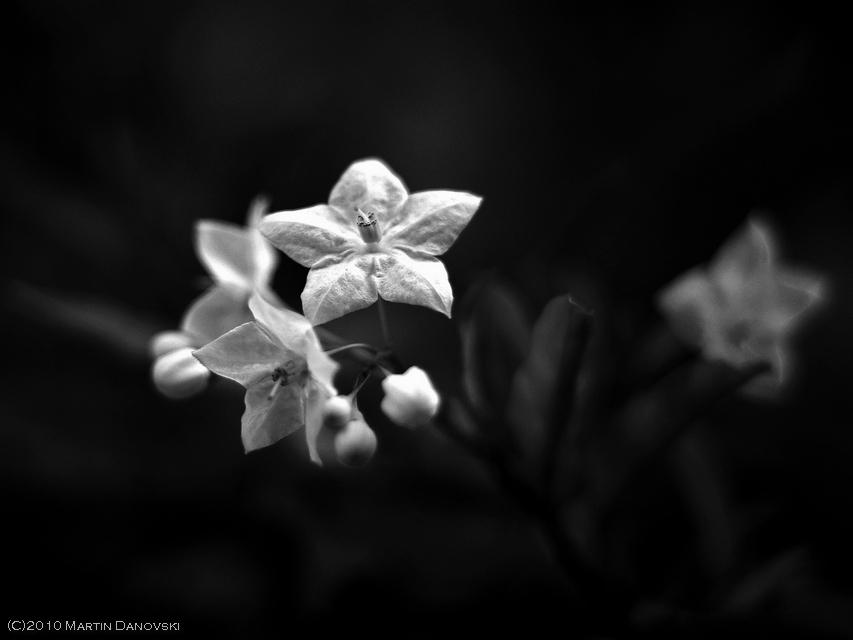 Floral Imgp9610