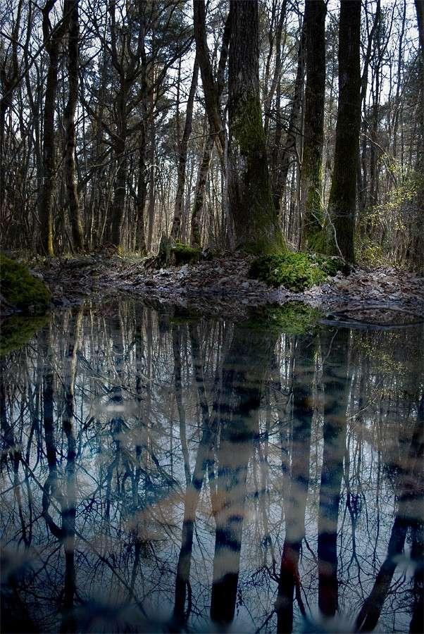 A mon ami virtuel, chemin des sorcières, reflets / 3 photos Arbrea10