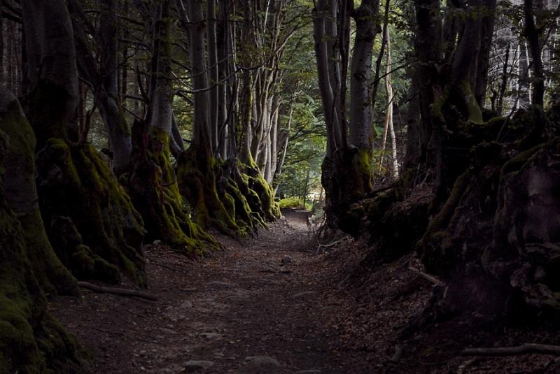 A mon ami virtuel, chemin des sorcières, reflets / 3 photos Le_che11