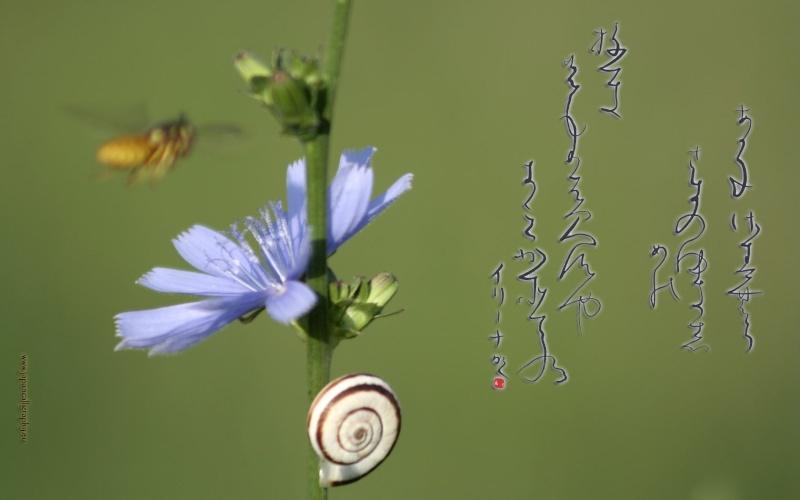JAPON ETERNEL  _1_a0_12