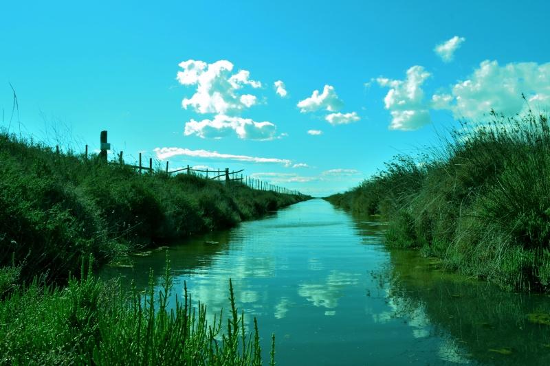 Canal, asséchée, Aigues-Mortes, Le maitre des lieux, Verger d'hiver / 5 photos Csc_0110