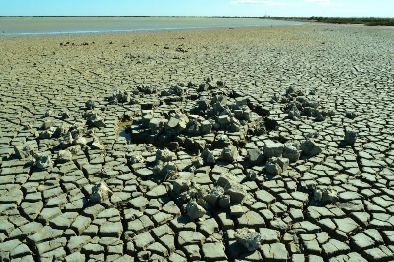 Canal, asséchée, Aigues-Mortes, Le maitre des lieux, Verger d'hiver / 5 photos Dsc_0110