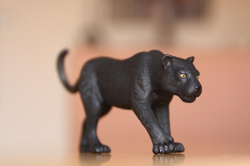 Mojo Bison and Black Panther Imagen40