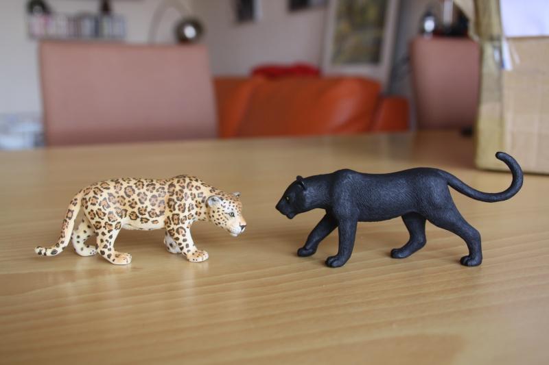 Mojo Bison and Black Panther Imagen45