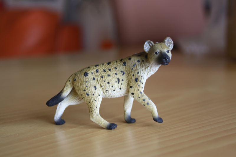 Mojo Spotted hyena... more pictures Imagen51