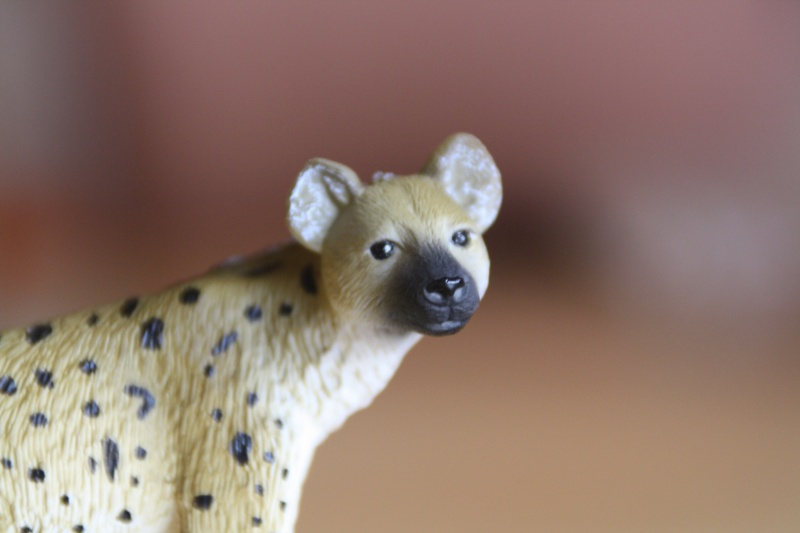 Mojo Spotted hyena... more pictures Imagen52
