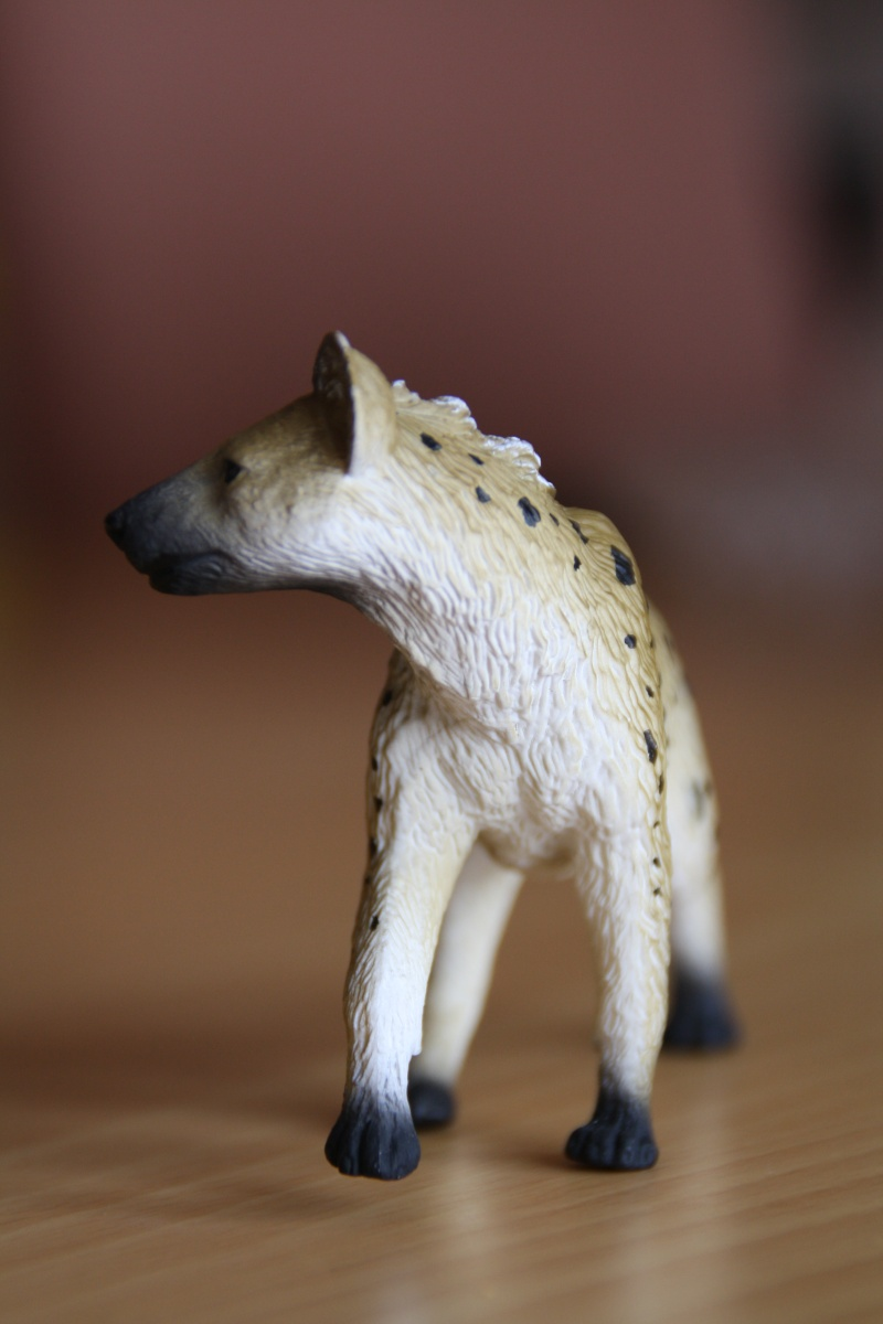Mojo Spotted hyena... more pictures Imagen53