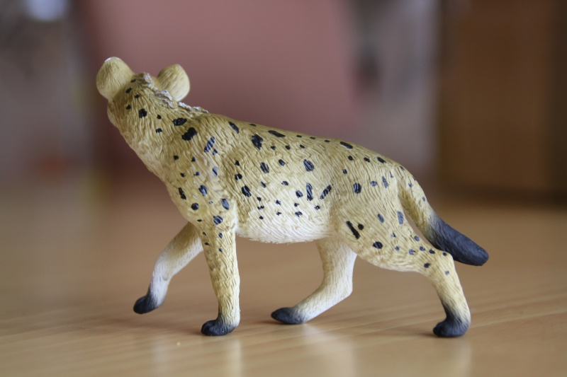 Mojo Spotted hyena... more pictures Imagen54
