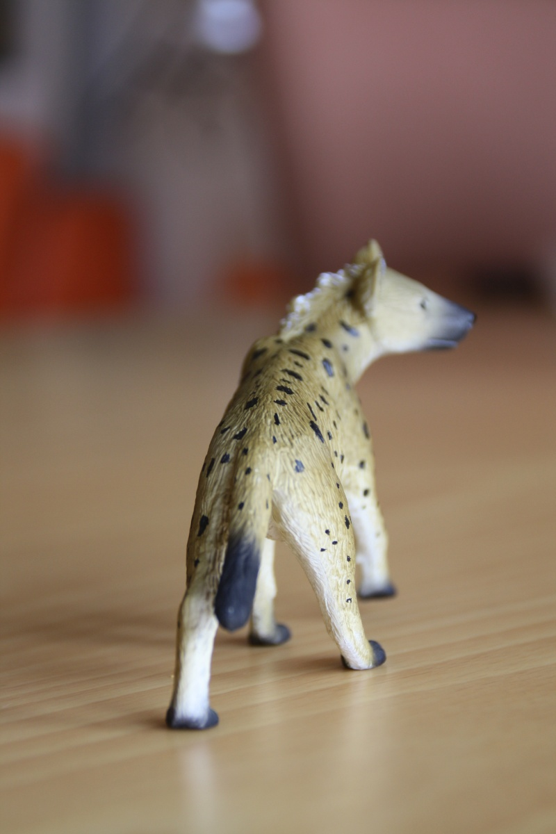 Mojo Spotted hyena... more pictures Imagen55