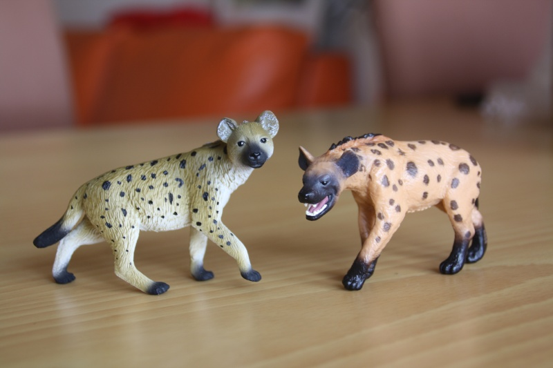 Mojo Spotted hyena... more pictures Imagen56