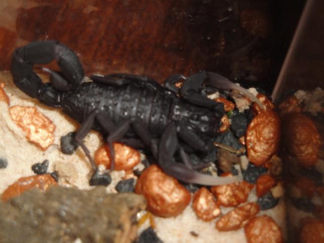 Envyizm's scorpion pictures Dsc04310