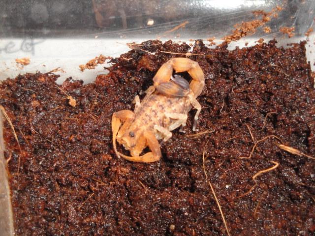 Envyizm's scorpion pictures Dsc04311