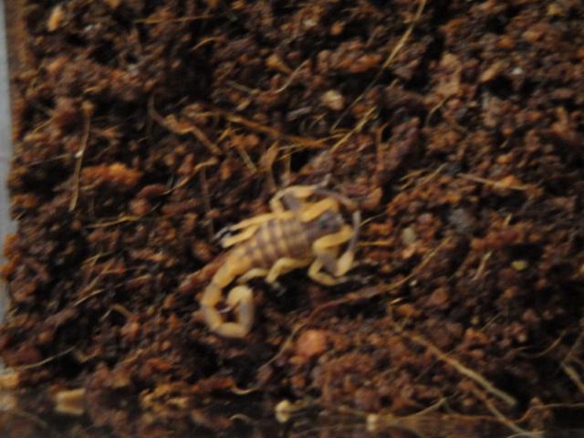 Envyizm's scorpion pictures Dsc04312