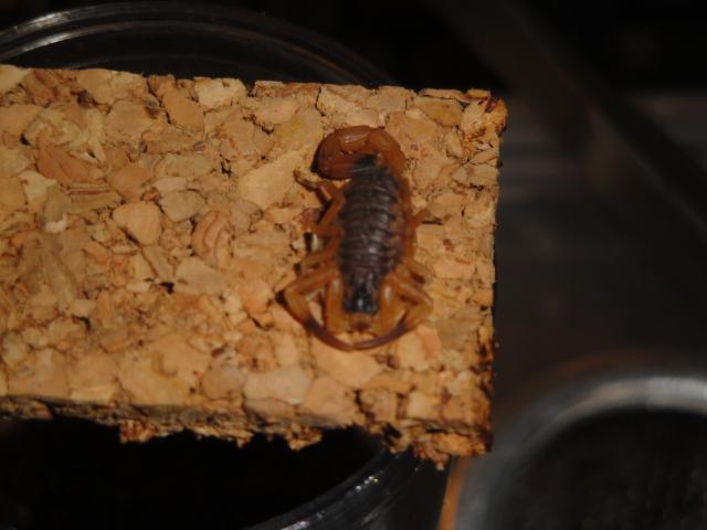 Envyizm's scorpion pictures Dsc04314