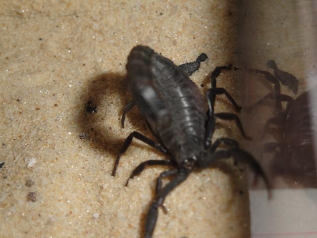 Envyizm's scorpion pictures Dsc04316