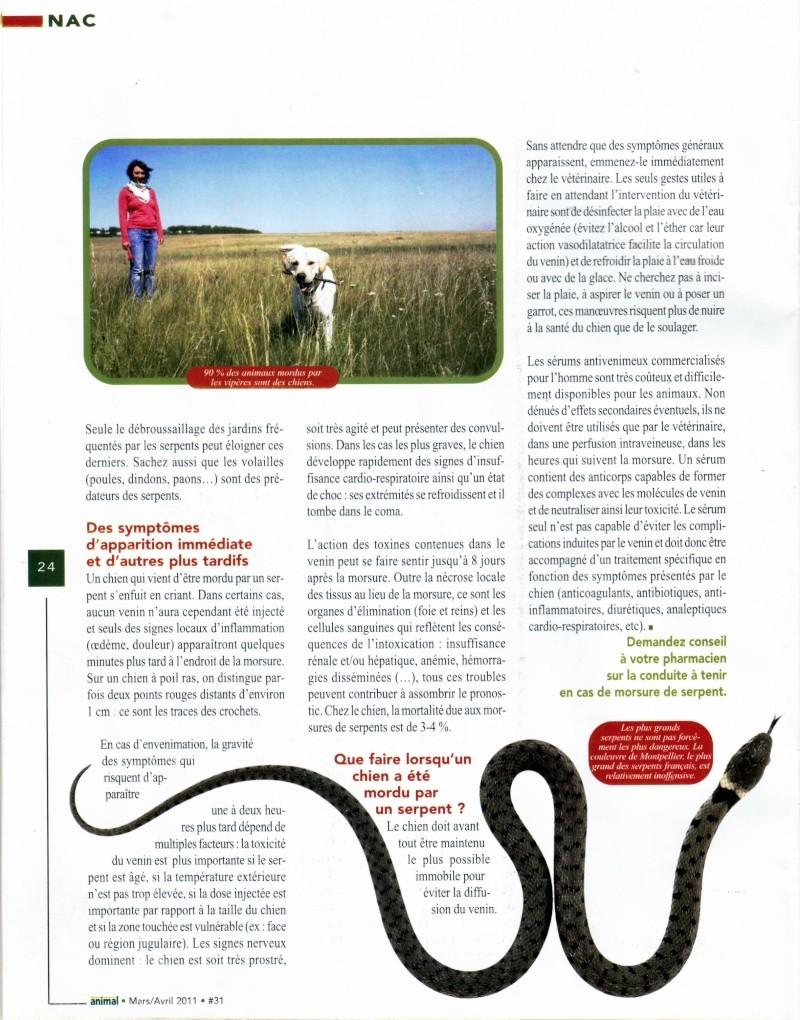 Morsure de vipère Page_310
