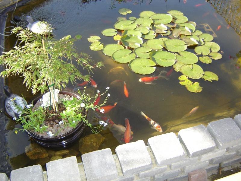 contruire un bassin  jardin Dsc06311