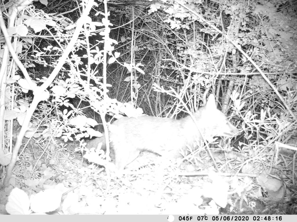 Nouvelle camera de chasse - Page 2 Pict0011