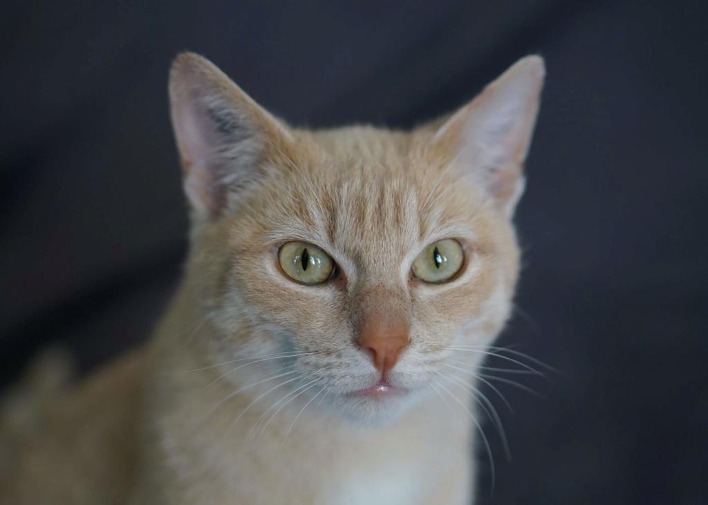 JOALINE, chatte européenne roux tabby, née le 28/08/14 Joalin15