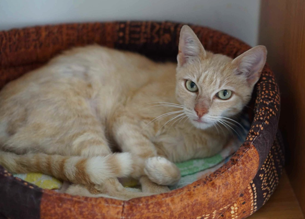 JOALINE, chatte européenne roux tabby, née le 28/08/14 Joalin17